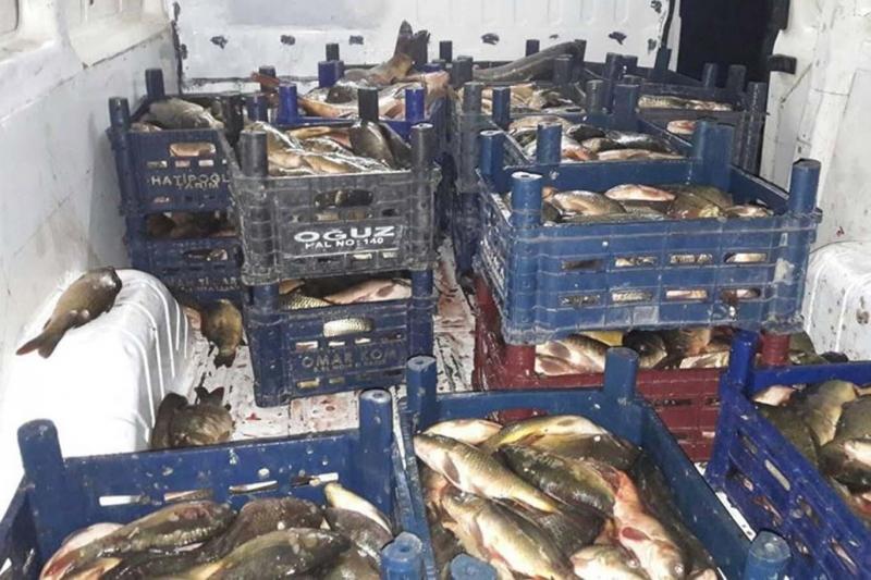 Elazığ'da kaçak balık avlayan kişiye 10 bin TL ceza kesildi