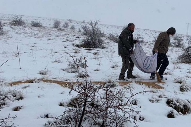 Elâzığ'da yaban hayvanları için dağlara yem bırakıldı