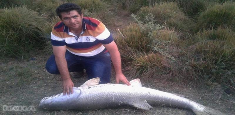 Fırat Nehri'nden 43 kiloluk balık avladı