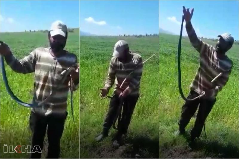Isırmaz deyip eline doladığı yılan tarafından ısırıldı-VİDEO