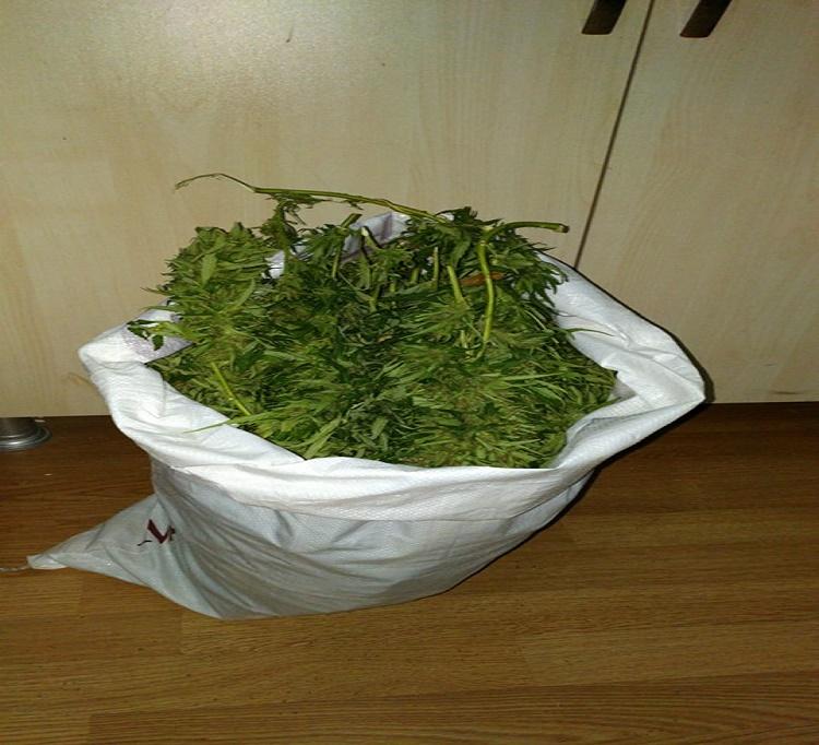 Kovancılar`da Uyuşturucu Operasyonu: 1 Gözaltı