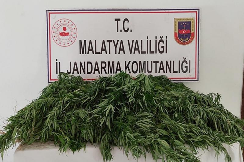 Malatya'da binlerce kök kenevir bitkisi ile av tüfeği ele geçirildi