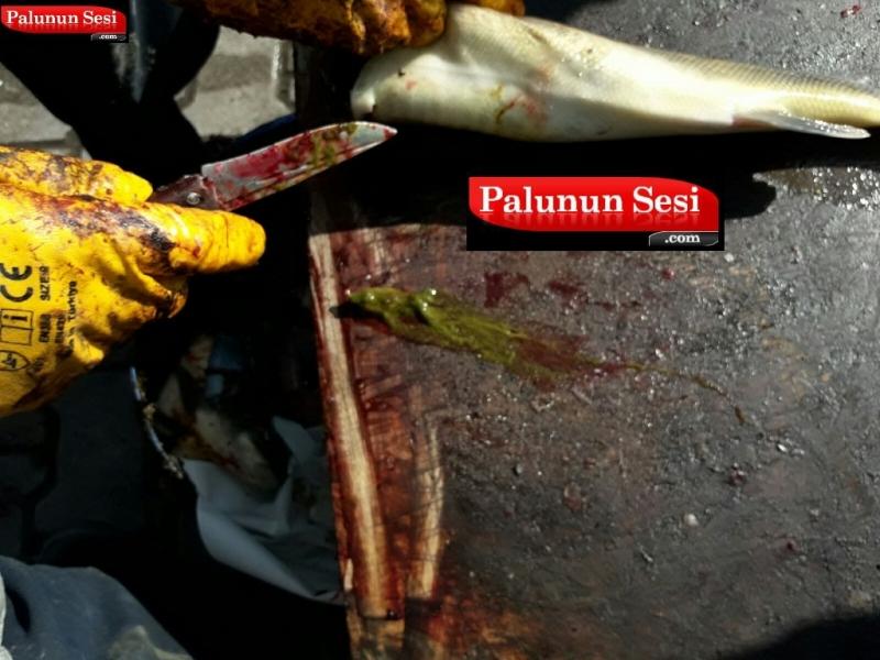 Palu Balıkçılarının Yakaladığı İlginç Balık
