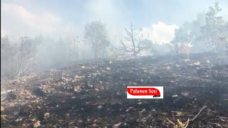 Palu`da Orman Yangını Devam Ediyor